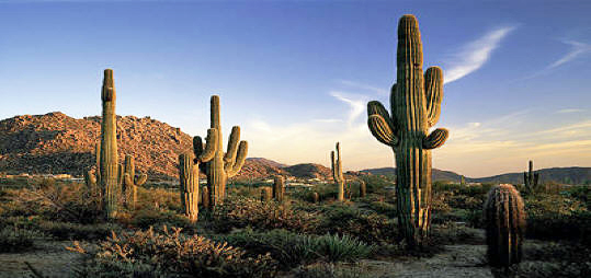 Scottsdale Vacation Travel Deals